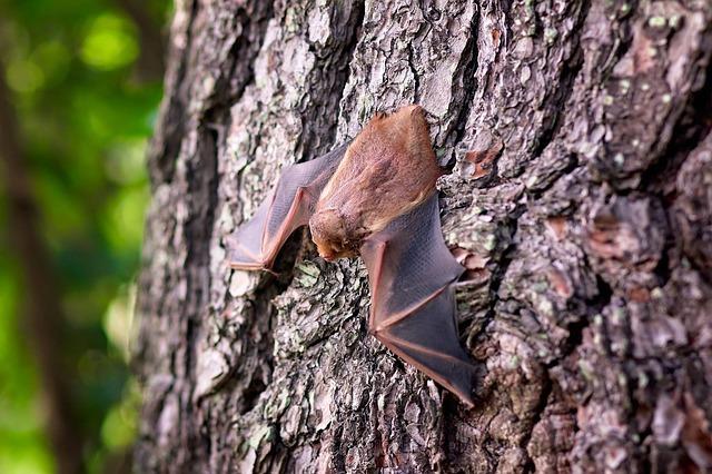 netopýr na stromě