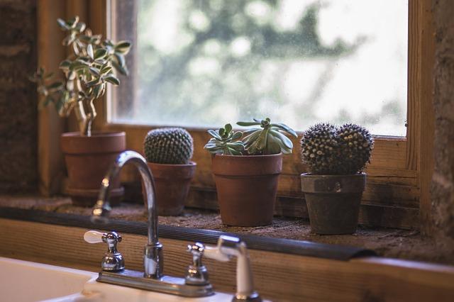kaktusy u dřezu