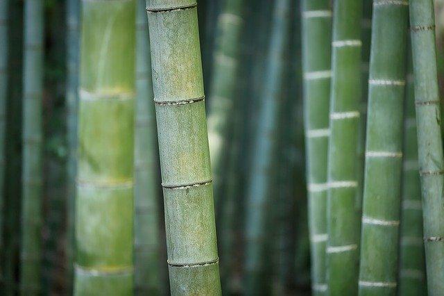 detail bambusu